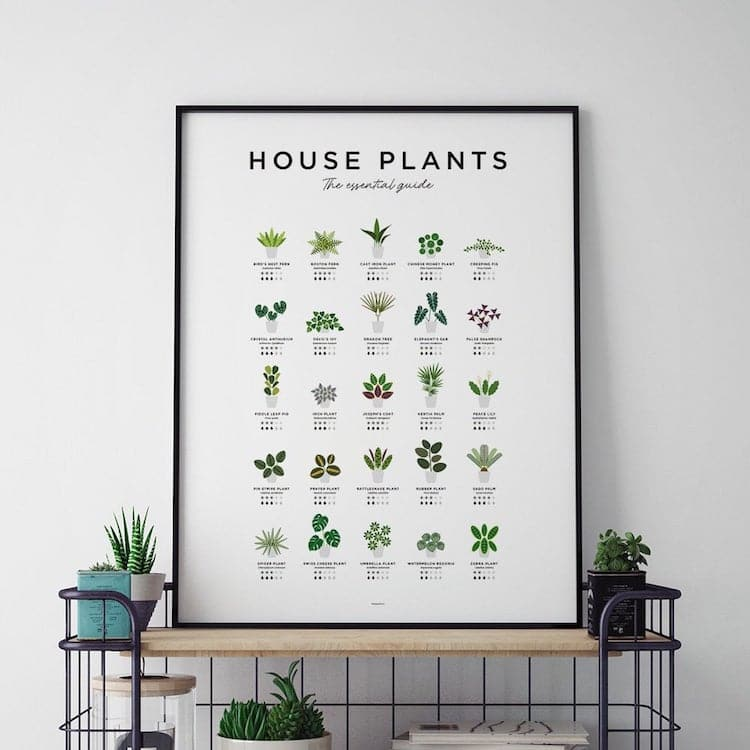Plant Lover Gifts