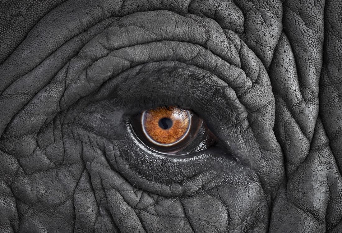 Brad Wilson Affinity Retratos de Vida Silvestre Retratos de Animales