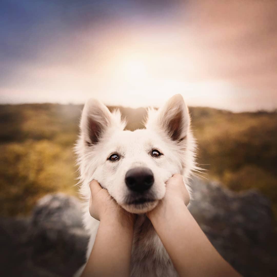 Dog Portraits by Kristýna Kvapilová