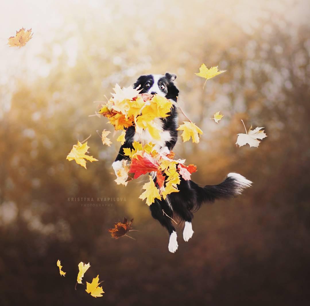 Retratos de Perros por Kristýna Kvapilová