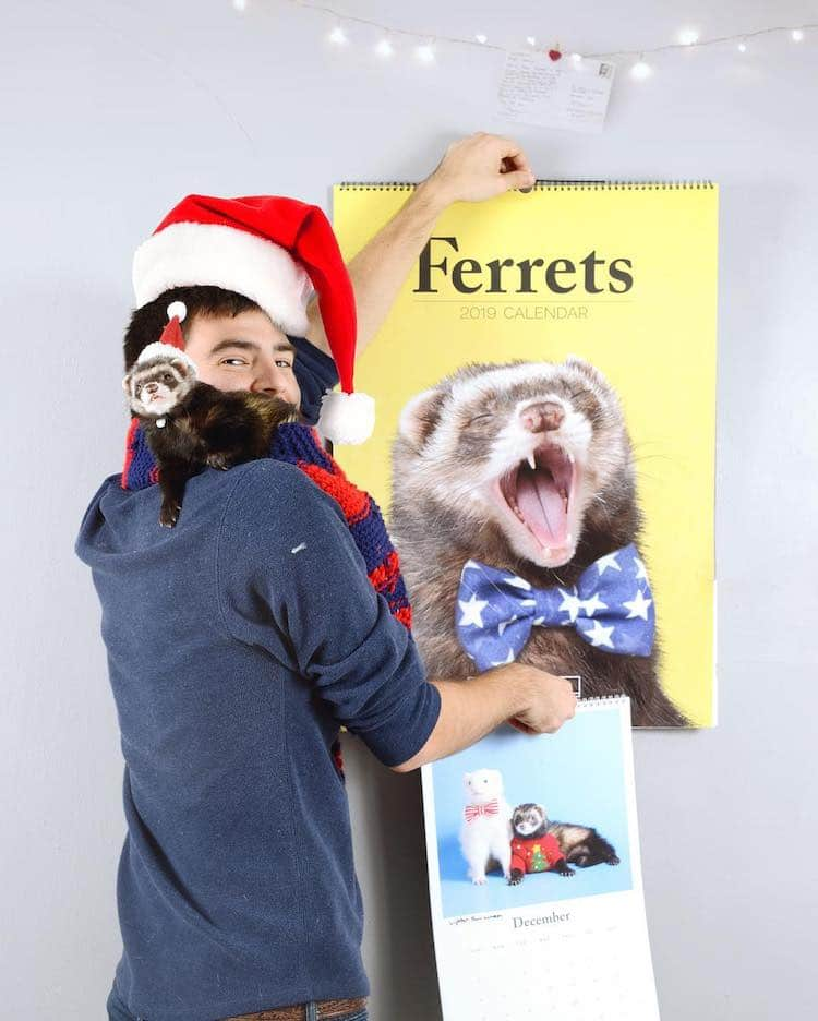 Ferret 2019 Yearly Calendar