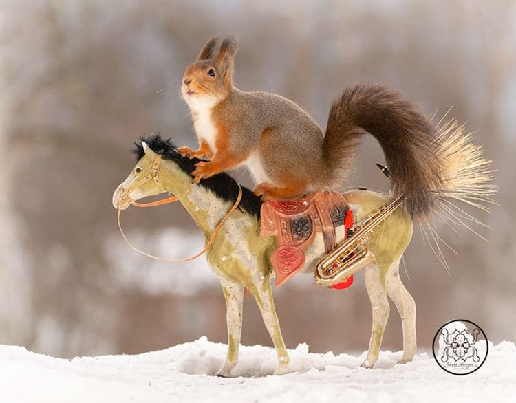 Red Squirrel Photos by Geert Weggen