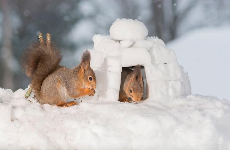 Squirrel Photos by Geert Weggen