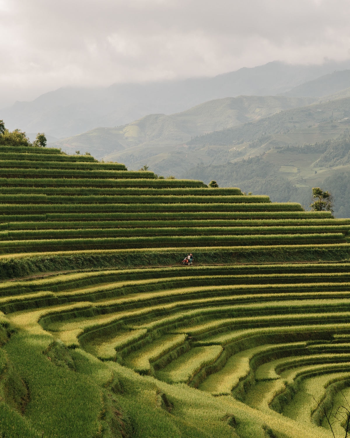 Rice terraces near Mu Cang Chai, Vietnam