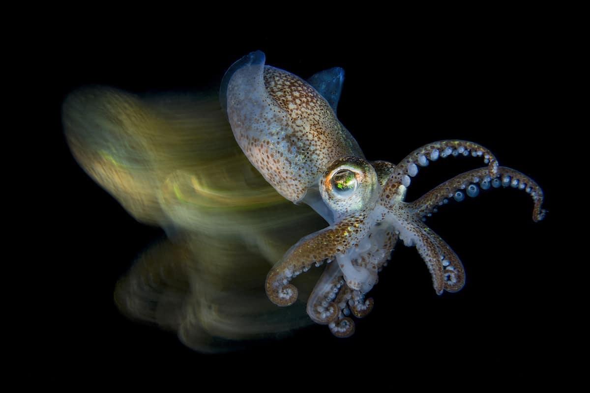 Ocean Art Underwater Photo Competition