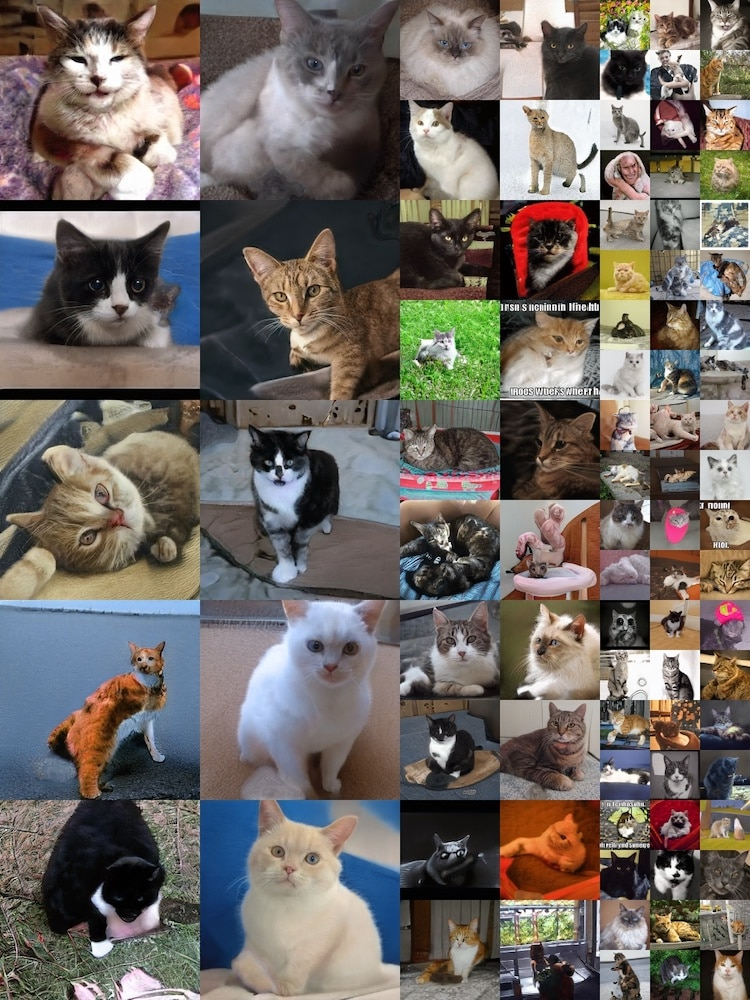 Fake Cat Pictures Generated by a Computer