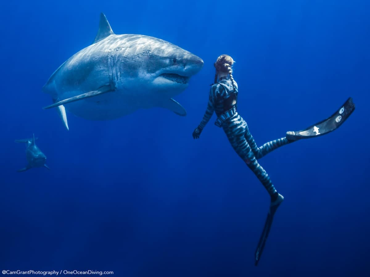 Shark Conservation by One Ocean Diving