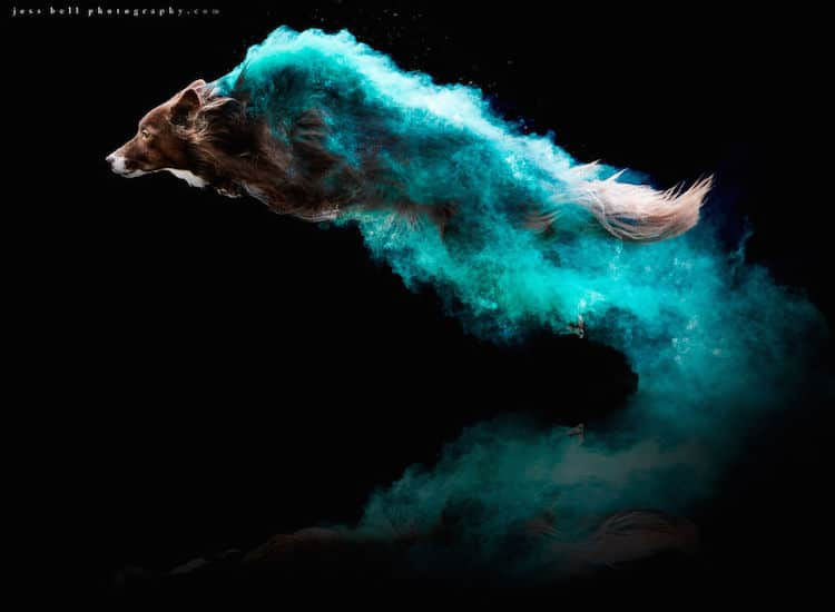 Color Powder Dog Photos by Jess Bell