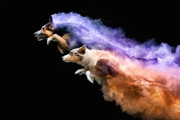 Photographer Uses Colored Powder in Experimental Dog Photos