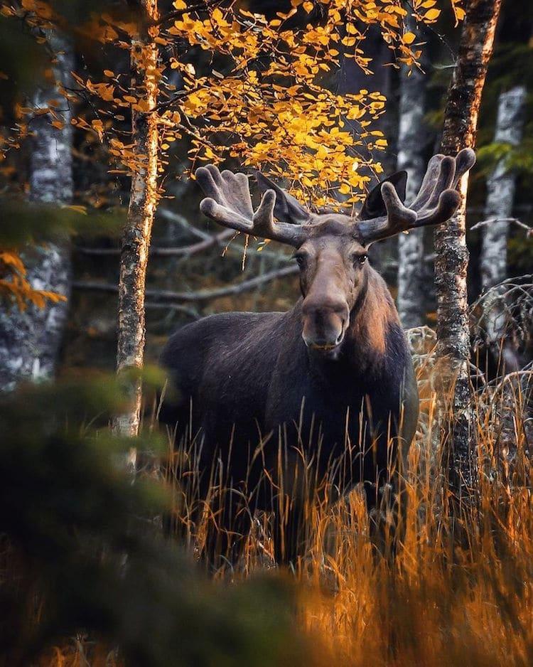 Fotos Animales del Bosque en Finlandia de Ossi Saarinen
