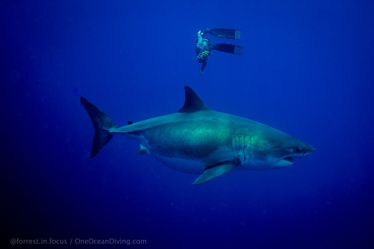 One Ocean Diving with Ocean Ramsey