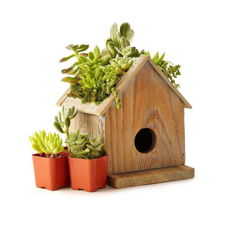 Succulents Birdhouse Planter