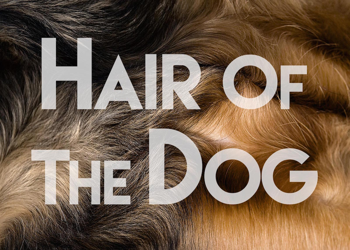 Hair of the Dog by Shaina Fishman