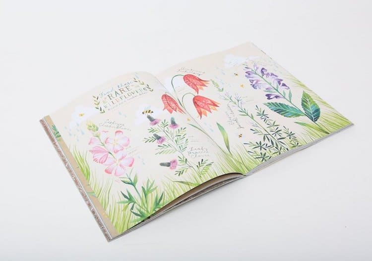 The Wildflower's Workbook Katie Daisy Book