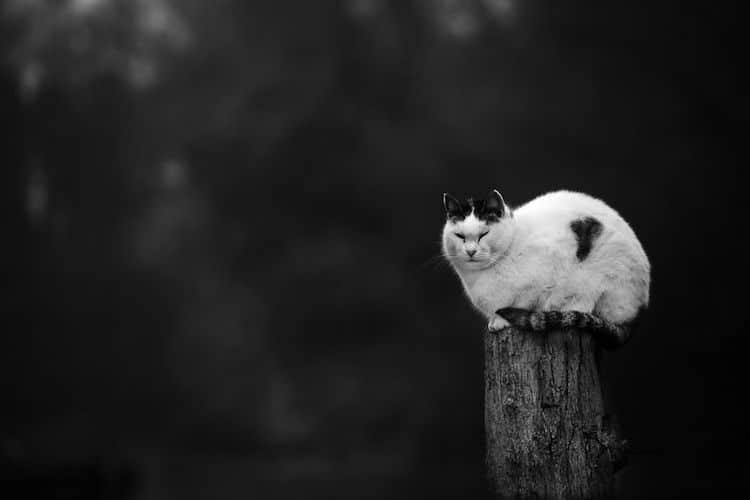 Monorail Cats by Sabrina Boem
