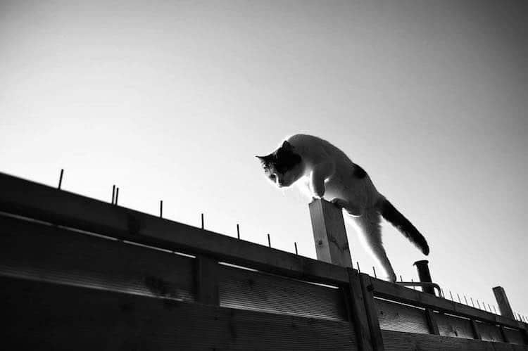 Gatos monorriel por Sabrina Boem