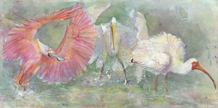 Peggy Macnamara Field Museum Paintings Wildlife Watercolor Paintings