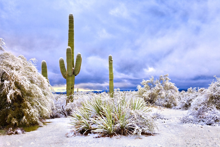 Snow in Arizona