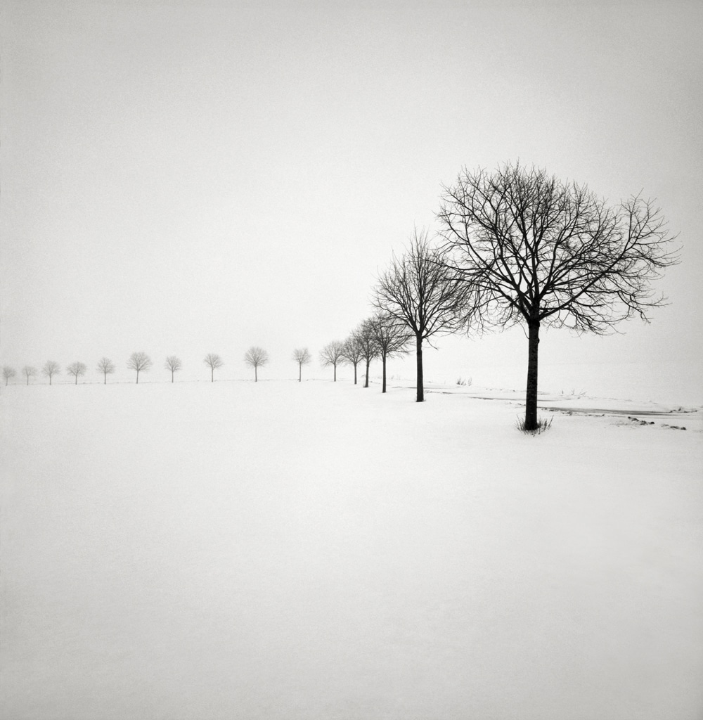 Winterscapes Snow Covered Trees in Winter Hakan Strand