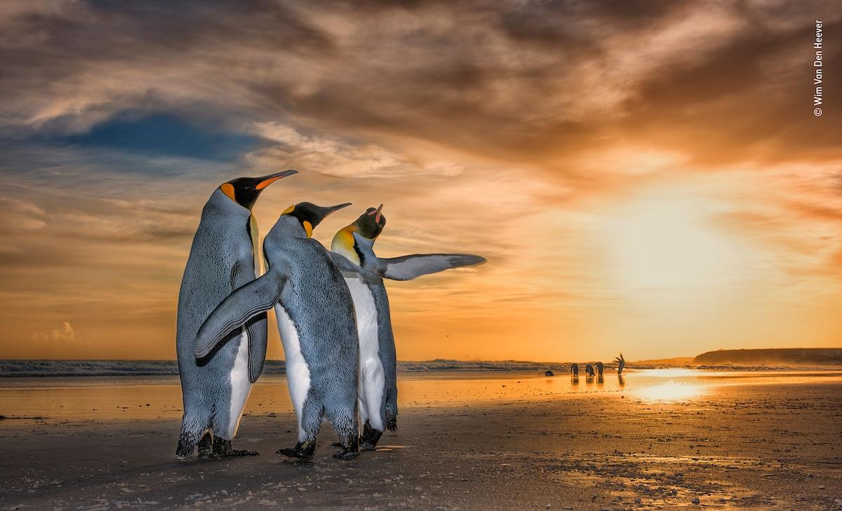 Wildlife Photographer of the Year Premio del Público LUMIX 2018