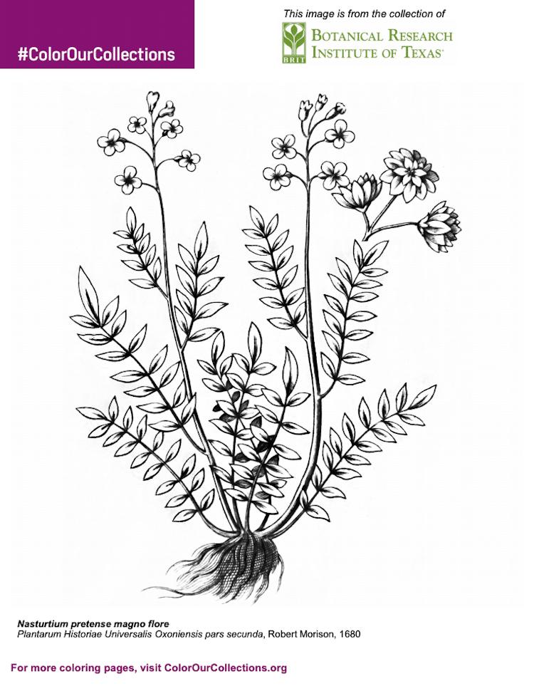 dibujos para colorear botánicos