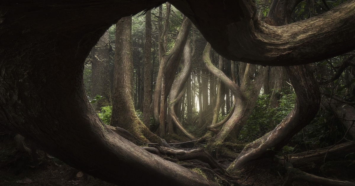 Amazing Winners of the International Landscape Photographer of the Year Contest