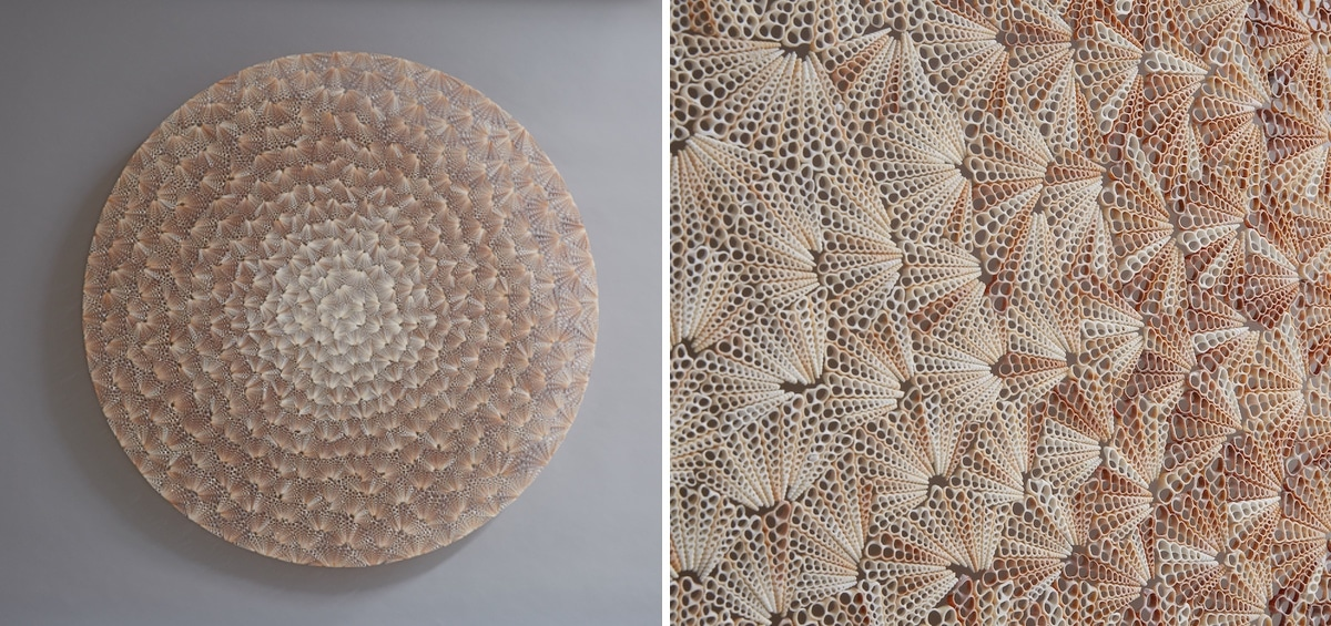 Rowan Mersh - Seashell Sculptures