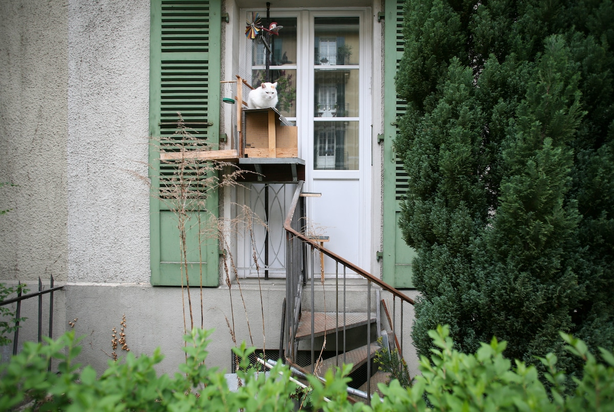 Swiss Cat Ladders by Brigitte Schuster