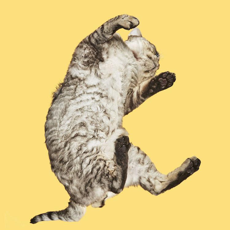 Under-Cats gatos vistos desde abajo por Andrius Burba