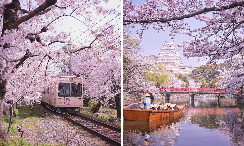 Photographer Captures The Beauty Of Japans Cherry Blossom Season