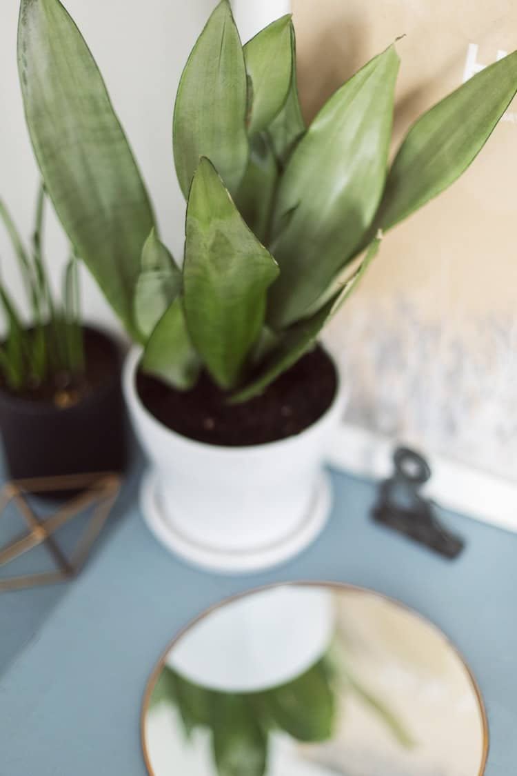 Easy to Care House Plants