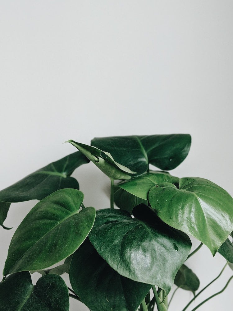 5 Easy Care Houseplants With Some Air Purifying Abilities