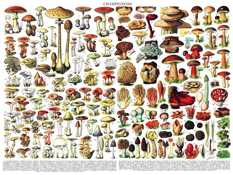 10+ Creative Jigsaw Puzzles for Adults That Endless Offer