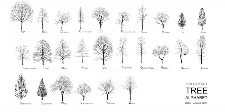 New York City Tree Font Alphabet by Katie Holten