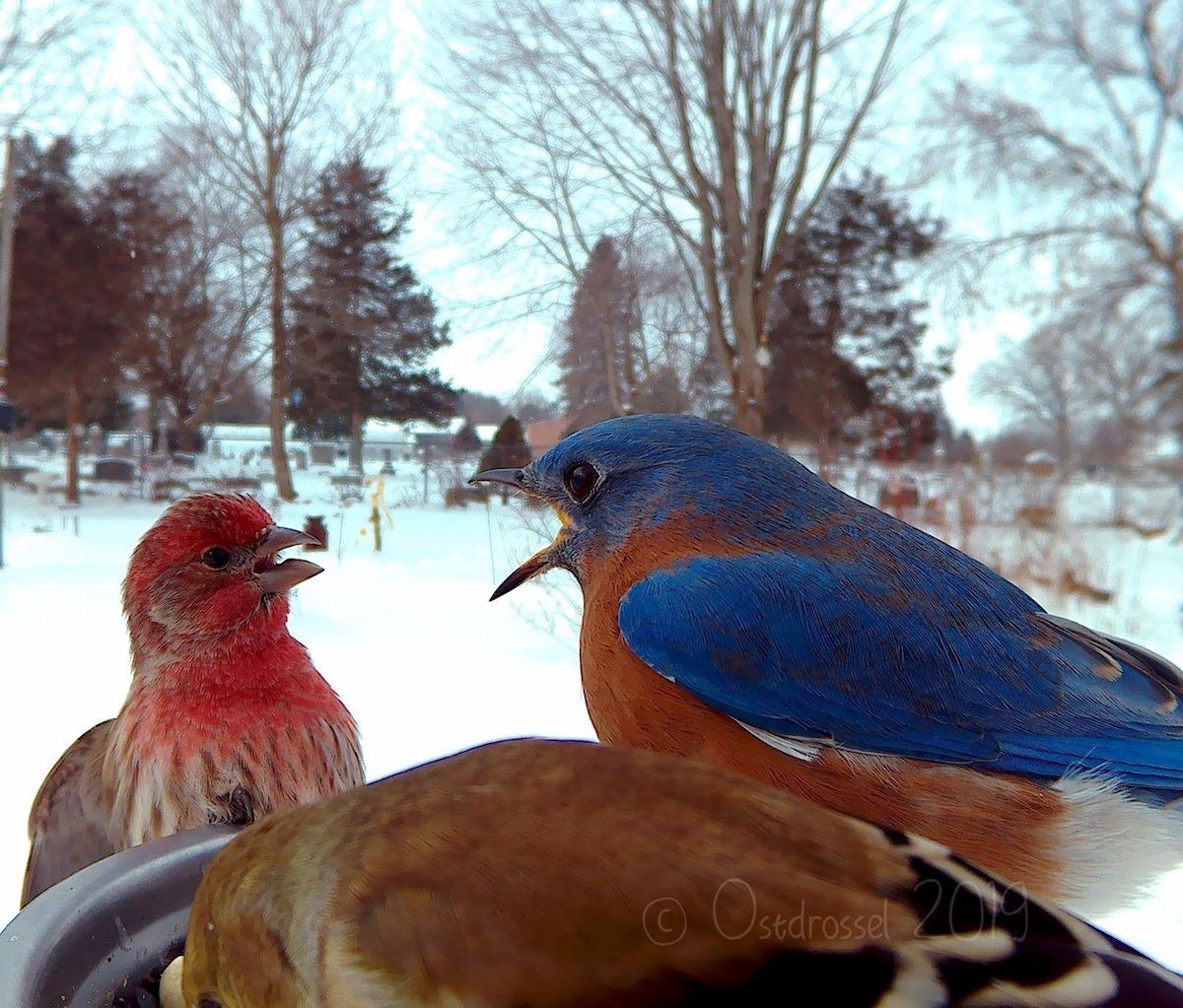 Fotos de aves por Ostdrossel