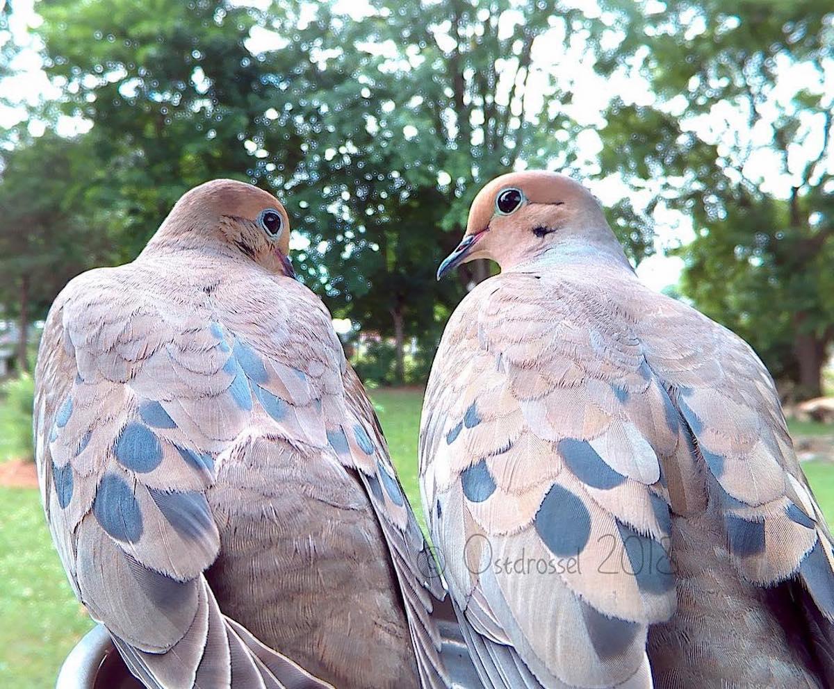 Fotomatón de aves