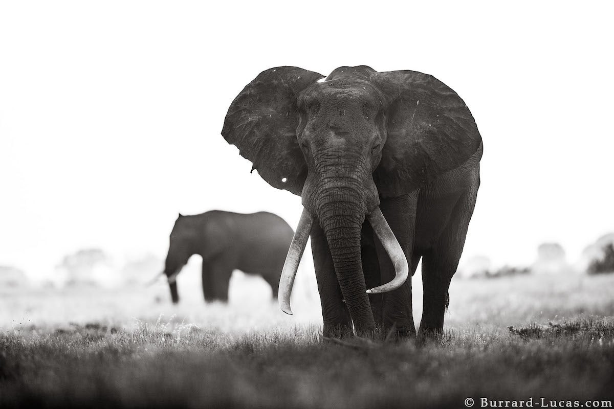 Photos of Elephants in the Wild