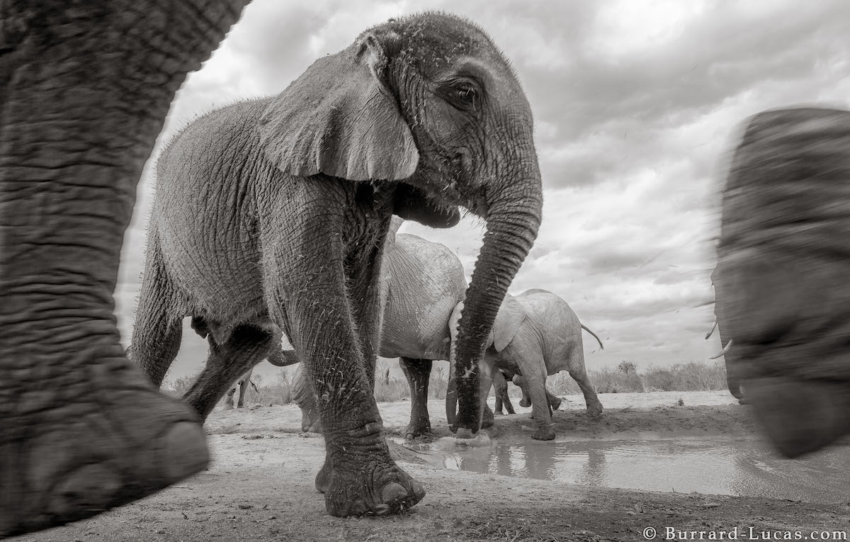 Incredible Final Portraits of a 60 Year Old African Elephant ...
