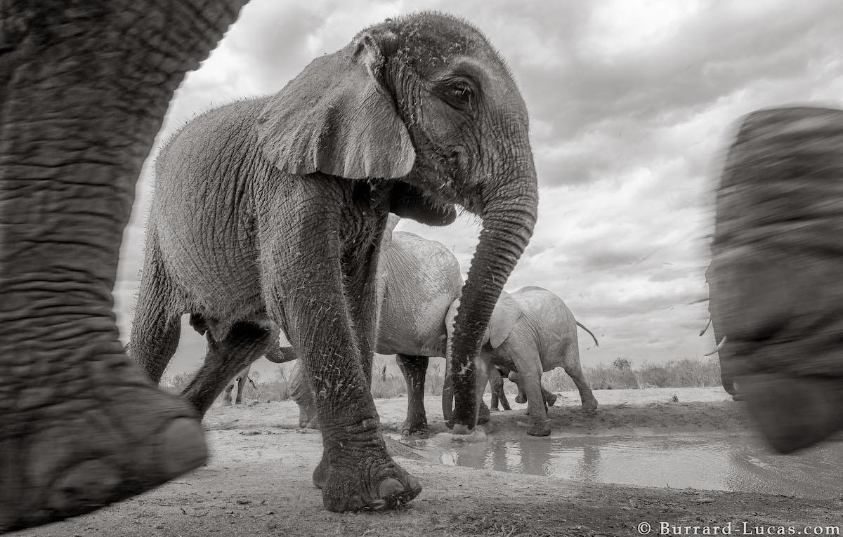 Photos of Elephants in the Wild