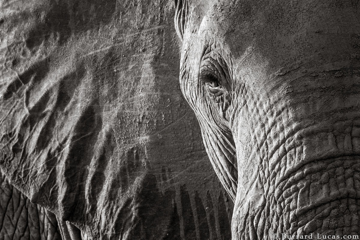Photo of an Elephant Head