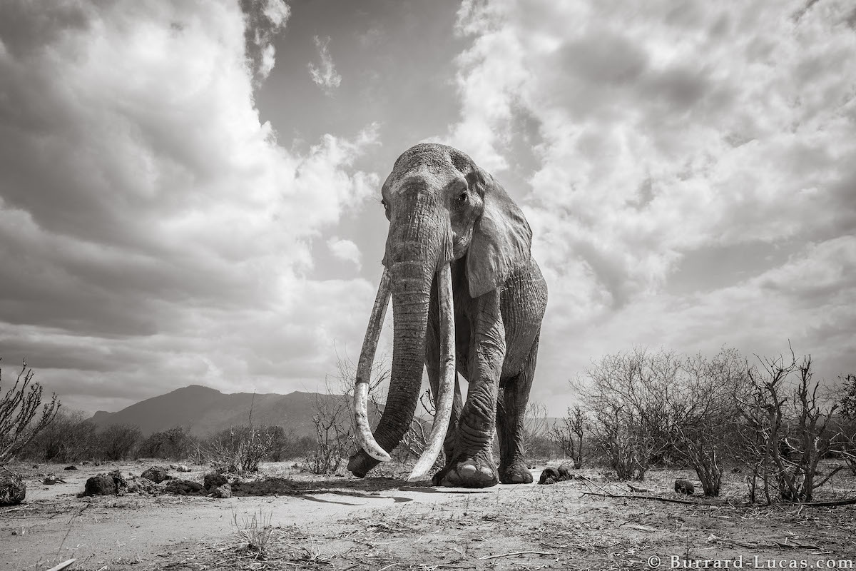 Photos of Elephants in Africa