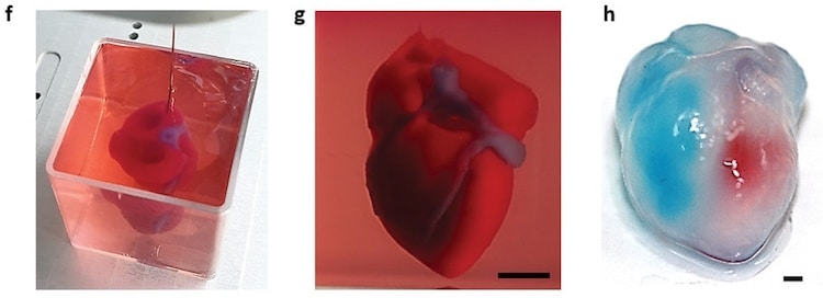 World's First 3D Printed Heart