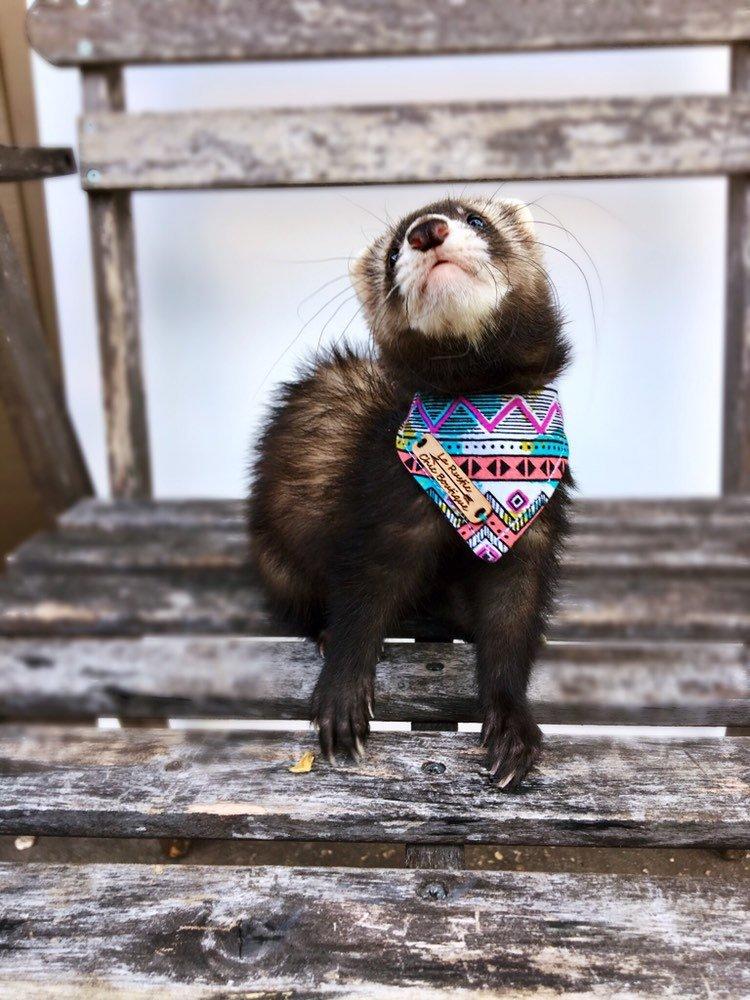 Cool Ferret Clothes
