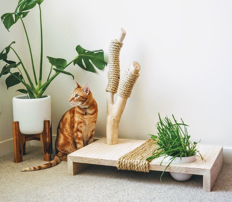 Indoor Cat Furniture and Cat Scratcher