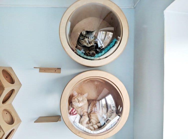 Casa para gato de interiores
