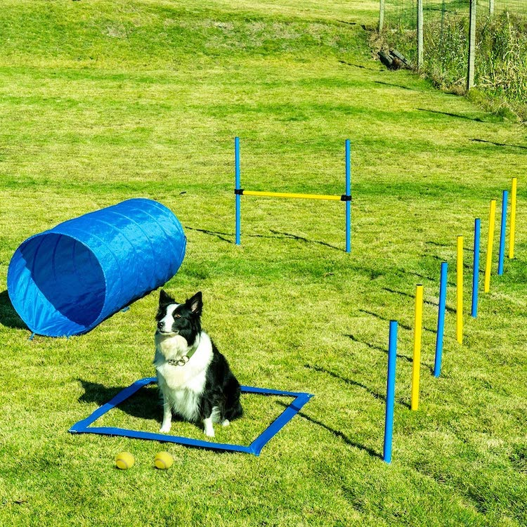 Dog Agility Set