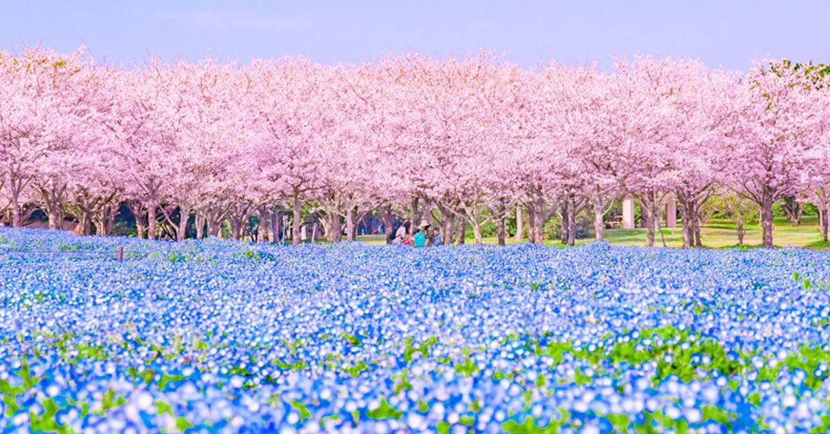 Gorgeous Japanese Landscape Photography Showcases Spring Stripe