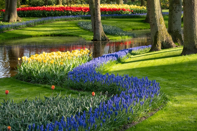 Keukenhof Flower Garden in The Netherlands