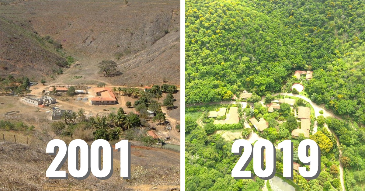Couple Spends 20 Years Planting an Entire Forest and Hundreds of Endangered Animals Have Returned