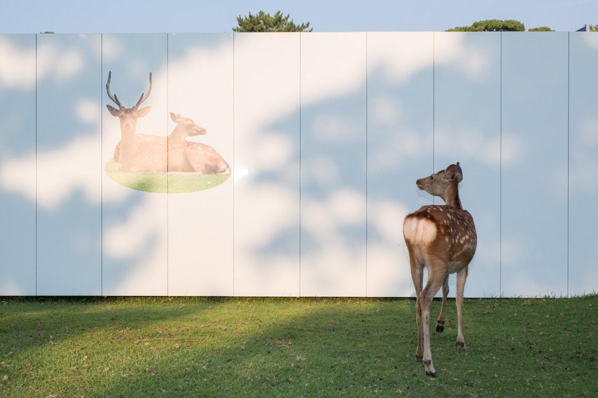 Sika Deer Nara Japan Beyond the Border by Yoko Ishii
